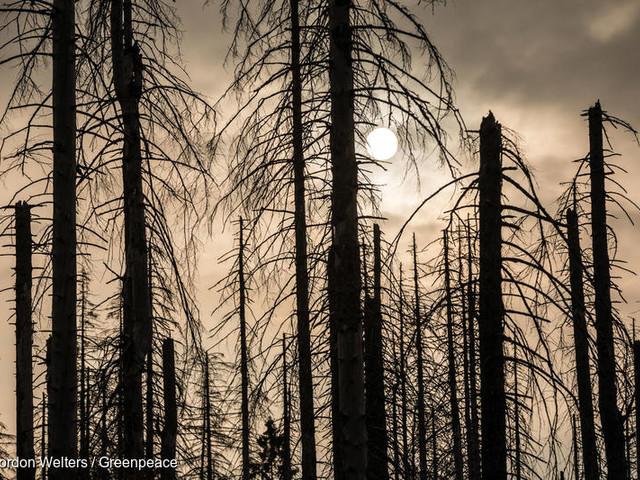 Perché fare affidamento sui pozzi di carbonio naturali non fermerà il disastro climatico