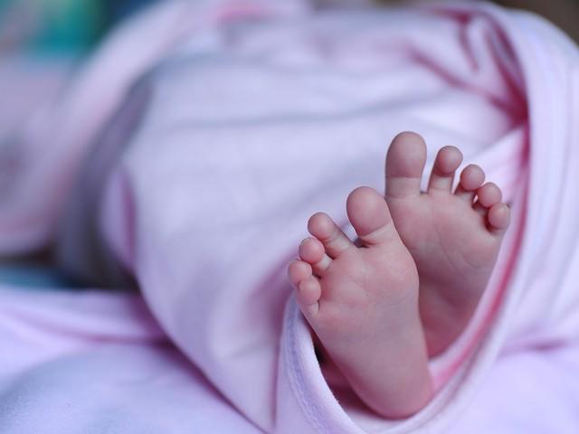 La casa degli orrori: 2000 feti trovati a casa di un dottore