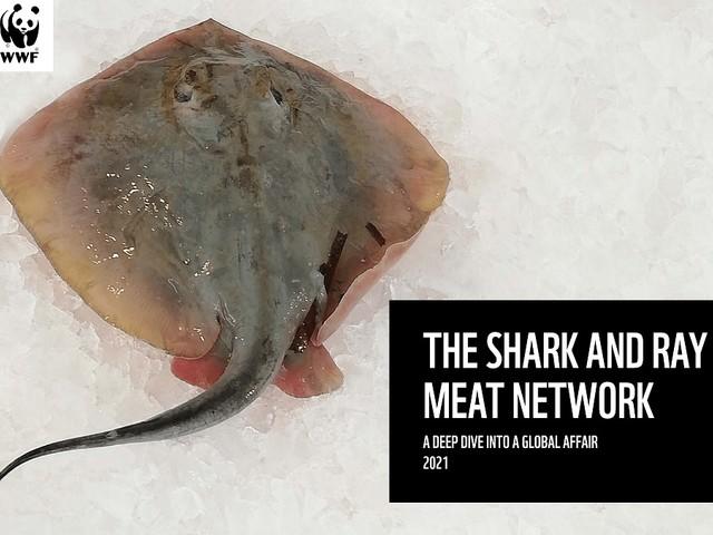Giornata mondiale degli squali: il commercio mondiale di squali e razze vale 2,6 miliardi di dollari