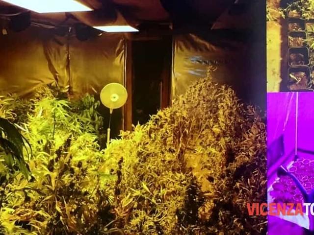 Spaccio e serra di marijuana in casa: arrestati due giovanissimi