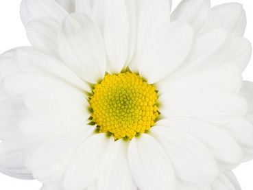 How to Make a Flower Brush in Photoshop