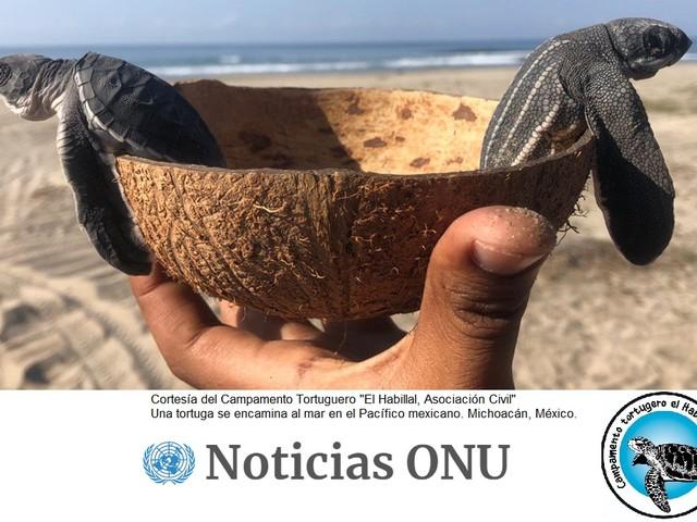 Messico: i campamentos tortugueros dei pescatori per salvare le tartarughe marine (VIDEO)