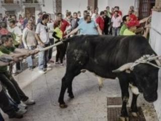 Spagna: animali torturati e uccisi nelle feste cattoliche