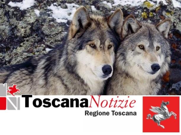 Danni da predazione dei lupi, dalla Regione indennizzi per oltre 363.000 euro