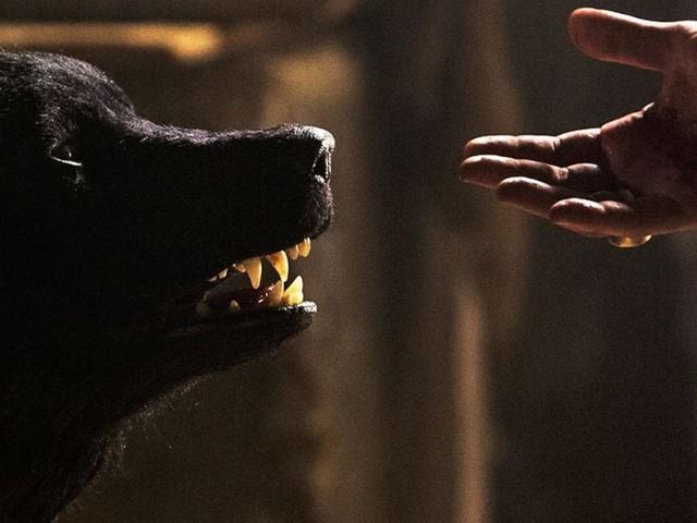 La scommessa Wolfsburg, dai produttori de Il Cacciatore la serie italo-tedesca sui lupi mannari