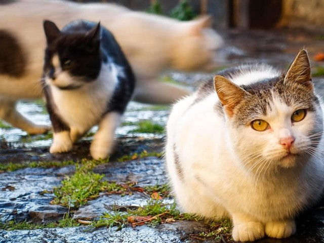 Puzza insopportabile: si teme il peggio, ma vive in casa con 4 gatti morti
