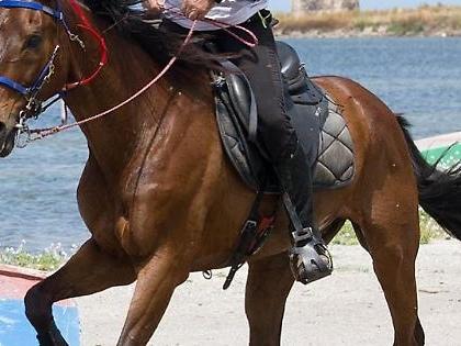 Equitazione, l'anno d'oro dei campani nell'Endurance