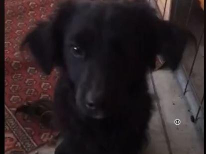 La Polizia Locale del Chiese cerca padrone per un cagnolino (ecco il VIDEO in cui scondinzola)