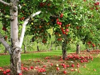 La mela non cade mai lontano dall'albero