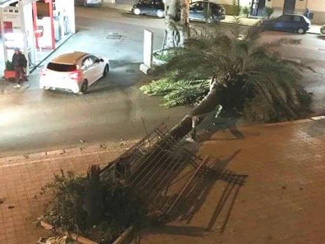 Ancora danni per il vento in Sicilia Alberi caduti nel Palermitano Cancellate le corse per le Egadi