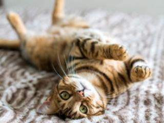 A Roma i gatti più belli e simpatici a SuperCat Show 2019