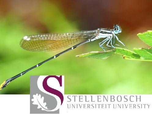 Ecco come possiamo aiutare a salvare gli insetti dall'estinzione