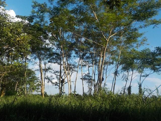 Cambiamenti climatici, deforestazione in Amazzonia tra i temi del G7