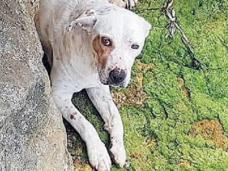 Cane in acqua con una pietra al collo a Trapani, il giudice chiede l'archiviazione
