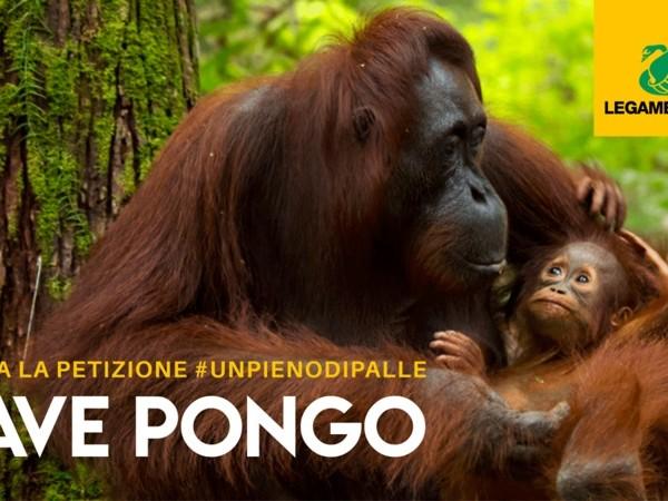 Olio di palma nei biocarburanti: il 58% degli italiani chiede lo stop prima del 2030 (VIDEO)