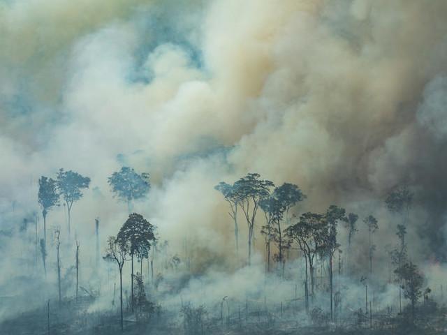 Cartoline dall'inferno: gli incendi che stanno consumando l'Amazzonia visti da vicino