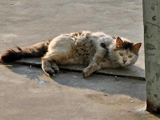 Gioia Tauro, gatto ucciso a bastonate da un bidello davanti ai bambini