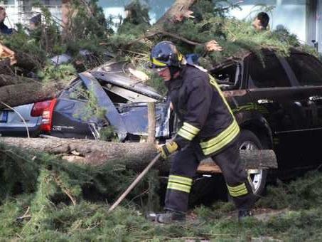 Alberi crollano sulle auto, decine di veicoli schiacciati