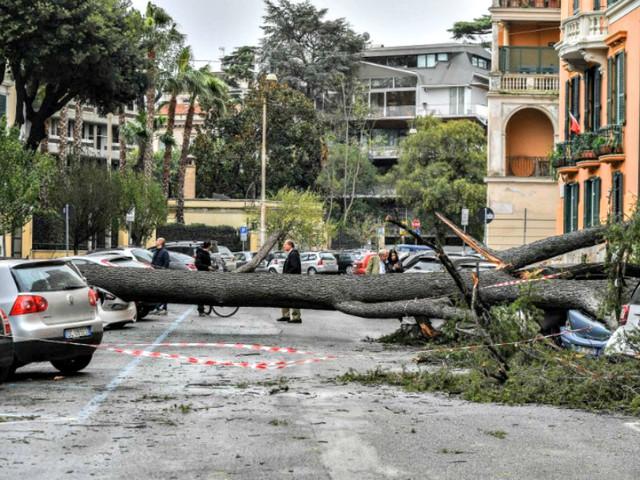 Maltempo a Roma, alberi caduti in tutta la città per le violenti raffiche di vento