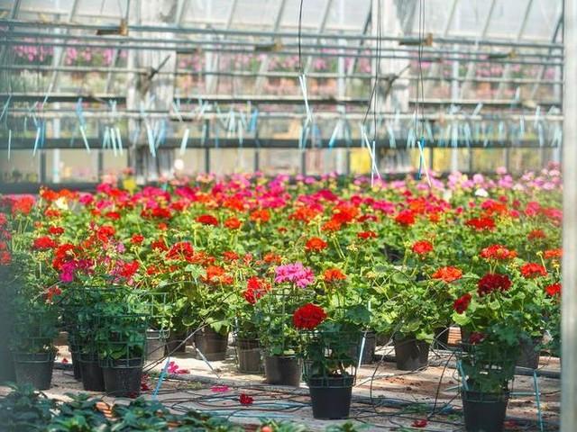 Piante e fiori, la ripartenza dopo il Covid arriva dall'export