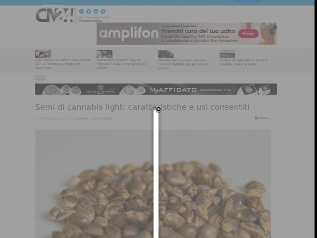 Semi di cannabis light: caratteristiche e usi consentiti