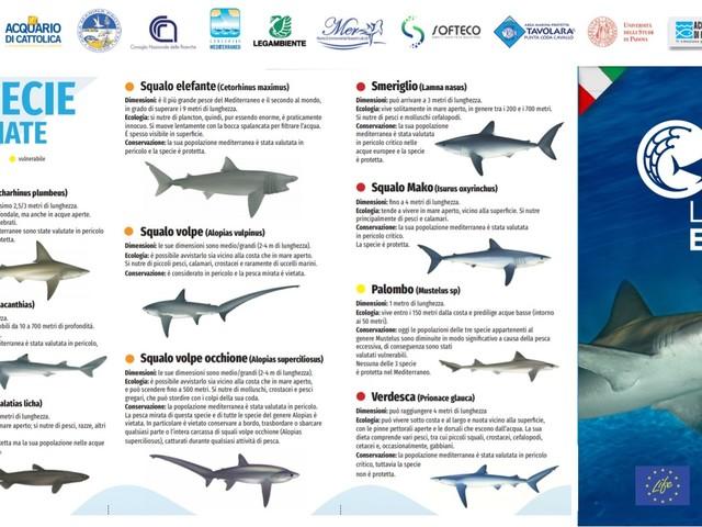 Giornata mondiale della natura: un click per difendere gli squali nel Mediterraneo