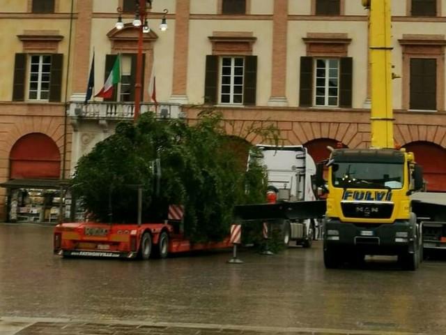 Trasportato da un grosso camion: è arrivato da Premilcuore l'albero di Natale che illuminerà Piazza Saffi