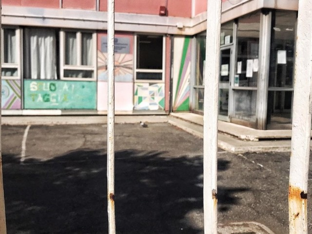 """Roma, piccioni dentro la scuola a Trionfale: """"due casi sospetti di salmonellosi"""""""