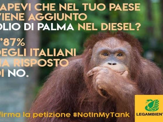 Olio di palma nei biodiesel, la Commissione Ue: causa deforestazione ma può essere utilizzato