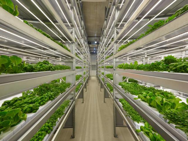 Agricoltura innovativa: approvata legge per uno sviluppo green delle città
