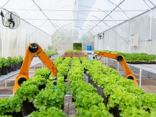 Credito d'imposta agricoltura 4.0: c'è tempo fino al 31 dicembre 2020