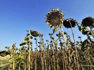Cambiamenti climatici, Coldiretti: «Caldo anomalo sta mandando in tilt le coltivazioni»