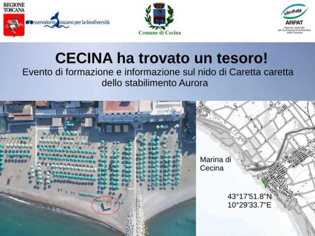 Nidificazione della tartaruga marina a Cecina: l'Osservatorio Toscano per la Biodiversità definisce le linee di intervento