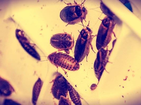 Abitereste vicino al più grande allevamento di scarafaggi al mondo?