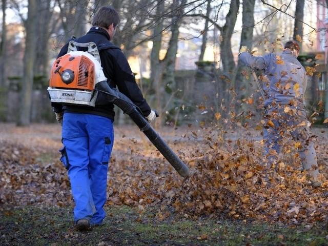 Il governo tedesco: i soffiatori e aspiratori di foglie sono fatali per gli insetti già in declino