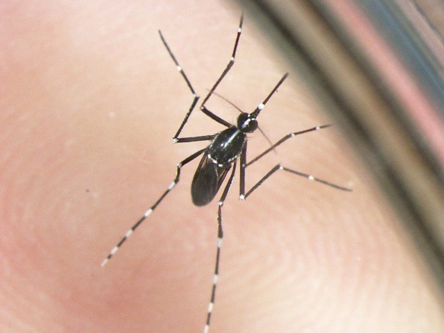 Dengue, West Nile e Zika: aumentano i casi in Italia e calano quelli da zecca