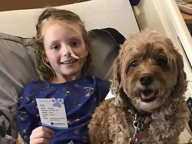 Bimba di 7 anni affetta da un cancro: i cani la consolano scrivendole lettere