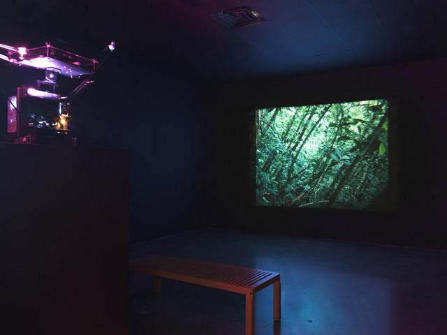 Daniel Steegmann Mangrané: arte come combinazione di elementi naturali e dispositivi tecnologici