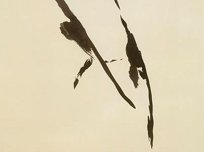 """Il centro dell'ombra e il fondo d'inchiostro: su """"La forza prigioniera"""" di Anna Ruchat"""