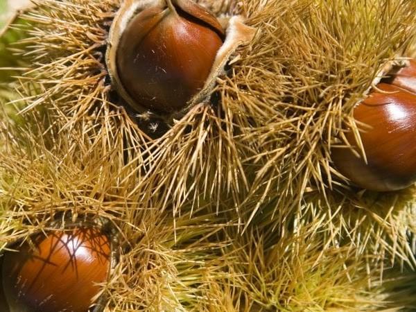 Ambiente: l'alternanza nella produzione di seme è un adattamento evolutivo delle piante alla scarsità di nutrienti