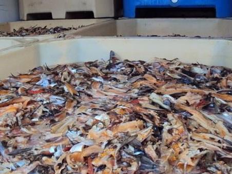 Rubavano pesce e vino dalle aziende di Veneto e Friuli per poi rivenderli in Puglia: cinque arresti