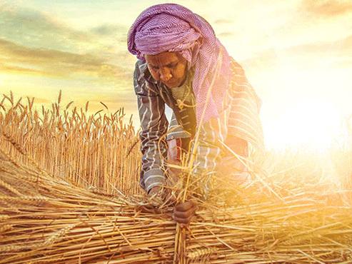 8 marzo, Coldiretti, oltre 200 mila donne in campi e stalle
