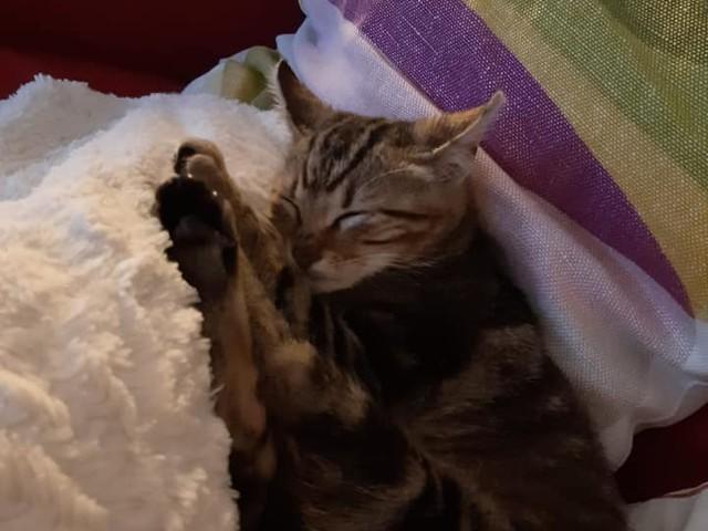 Roma, il gatto lanciato da un'auto è stato adottato: una storia a lieto fine