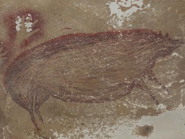 La più antica pittura figurativa dell'umanità: il cinghiale di Sulawesi, dipinto più di 45.500 anni fa