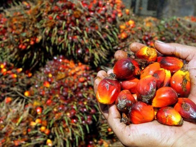 Olio di palma: quando gli interessi economici hanno priorità su ambiente e diritti umani