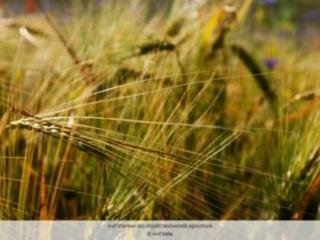Legge sull'agricoltura biologica: la Commissione agricoltura del Senato approva all'unanimità