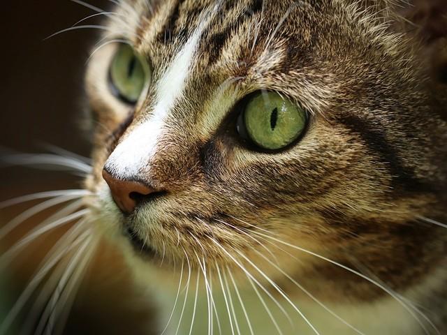 "Animali rapiti o scomparsi ora arrivano i ""petdetective"""