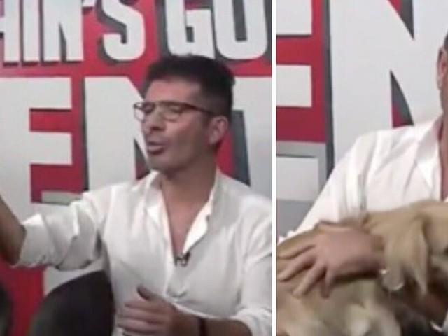 Simon Cowel presenta il cane salvato da un macello durante una trasmissione