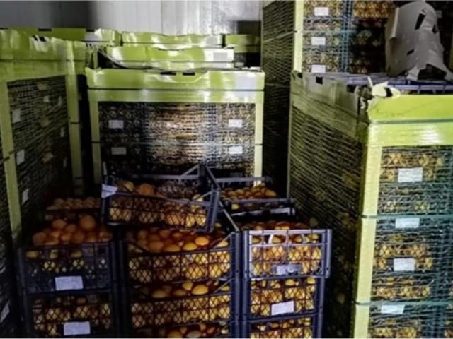 Sono cancerogeni e pericolosi, distrutti 20 mila chili di limoni importati dalla Turchia