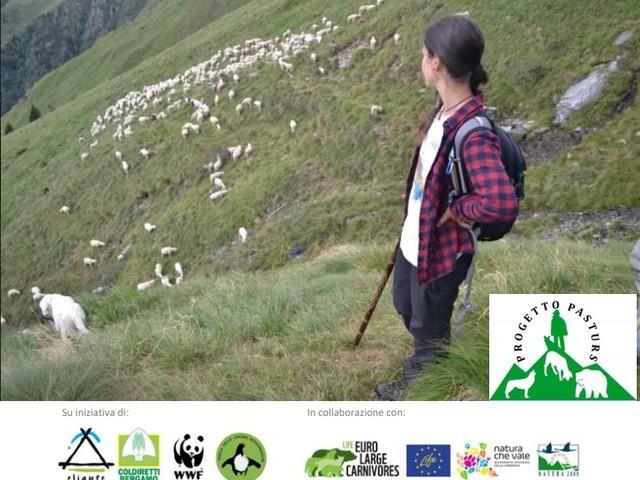 Riparte Pasturs, per la convivenza tra pastori, orso e lupo nelle Orobie Bergamasche